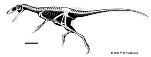 Sinocalliopteryx skeletal by Dinomaniac