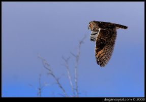 LONG-EARED OWL by dogansoysal