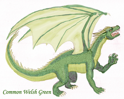 HP: Common Welsh Green by DairuAnubis