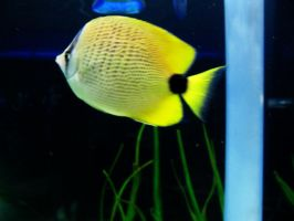 Fish 14 -- Sept 2009 by pricecw-stock
