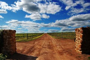 Wine Country by AdamsWife