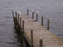 Seagulls on the dock by jessijoke