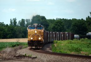 NS 19K on the branch 3 by wolvesone