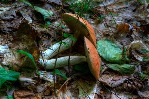Forest Floor by onejumpjohnny