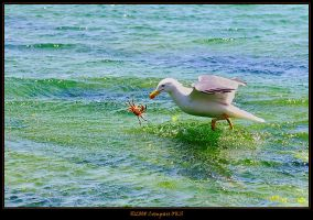Flying crab by CompassTR
