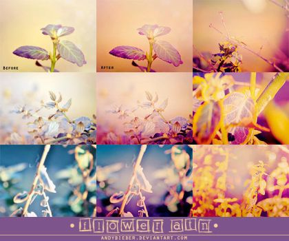 Flower ATN by AndyBieber