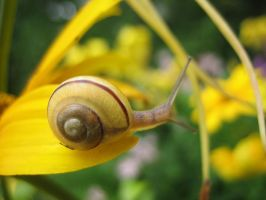 a snail by common-blue