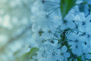 Icy warm white flowers by LordHenkutt
