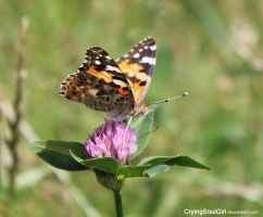 The Butterfly on Clover... by CryingSoulGirl