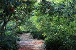Pathway Into the Forest by meeks105