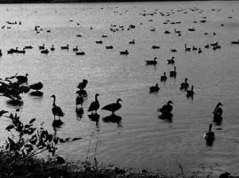 Flock. by brittanyross16