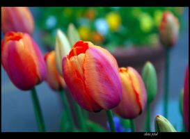 see me colourful by Zlata-Petal