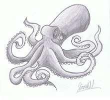 Octopus by ConkerTSquirrel