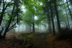 Path in Owlish Mountains by My-dynig-soul