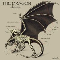 Dragon Anatomy -- Part Two by zelink14