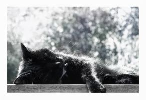 Let me sleeps by Cobs-Photography
