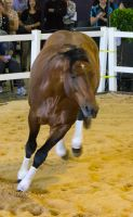 STOCK - 2014 Total Equine Expo-18 by fillyrox
