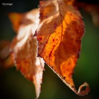 Enjolivure automnale I by hyneige