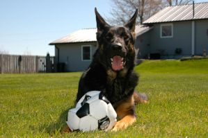 German Soccer Dog! by OurCoreKonvictions