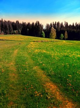 Outdoors in sunny spring by patrickjobst