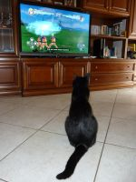 My cat love Naruto by OmegaDemonFox