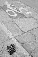 pigeon crossing by dskphotography