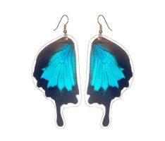 Blue Swallowtail Earrings (Papilio ulysses) by TheButterflyBabe