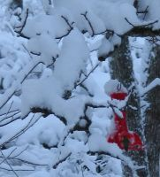 Humming bird in the snow... by Feaelen