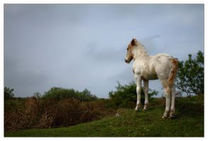Foal on the Hill by Bogbrush