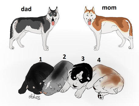 Husky puppies Adopts (closed) by vladheart