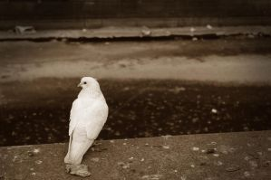 Lonely dove by FlyingApplesaucer