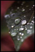 Dew Drops by RobertRobledo