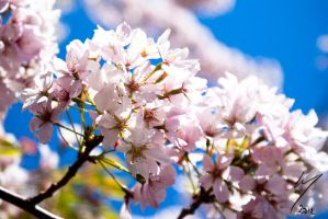 Almond Tree by Inarita