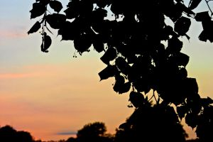 Leafy Sunset by Art-ography