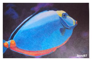 Acanthurus leucosternon by stand87