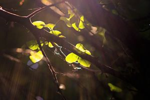 tree light 6 by x-chriscross-x