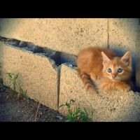 kitten by emilie-cat