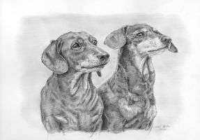Dachshounds by silima13