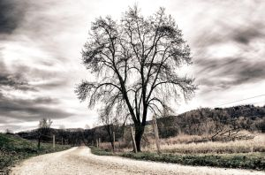 Tree by the Road by daenuprobst