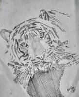 wild End drawing created by mohit kumar rao by mohitkumarrao