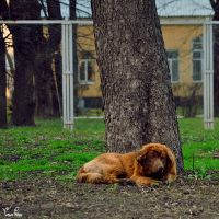 Lonely lover pet by duskOFsummer