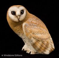 Barn owl by Reptangle