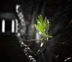 There always will be new life by RobertsGallery