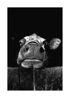moo by damo3sp