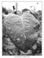 One Gray Leaf 046 by Eolhin