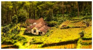 TILT-SHIFT by xonezx
