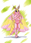 Rosy Maple Moth by RHCP-Cream