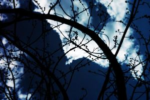 Winding Branches Silhouettes by LDFranklin