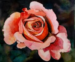 Rose in watercolor by jpancho