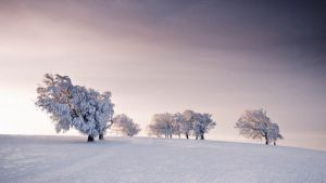 Winter Snow and Trees by stardeht